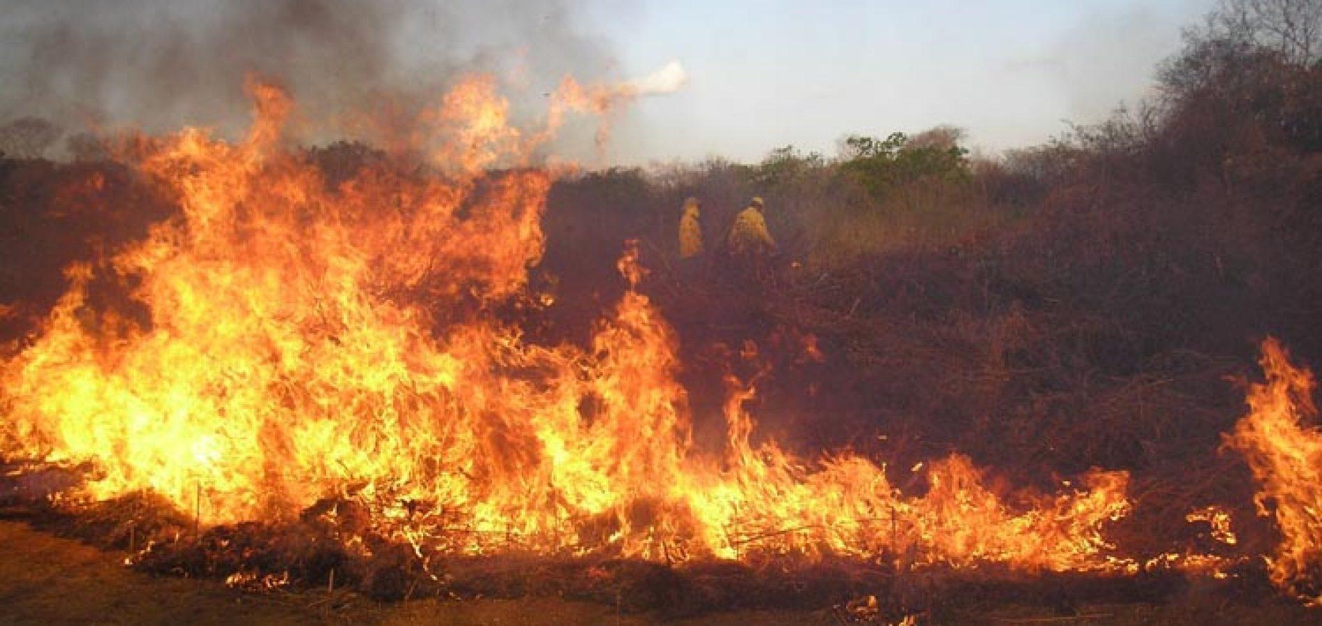Dez municípios apresentam elevado risco de incêndios no Piauí