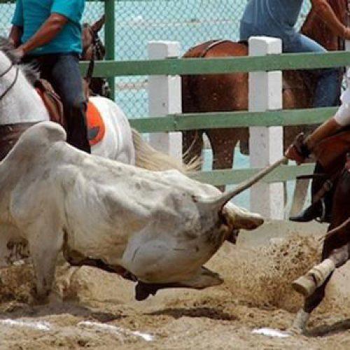 Projeto regulamenta vaquejada como esporte e prática cultural do Piauí