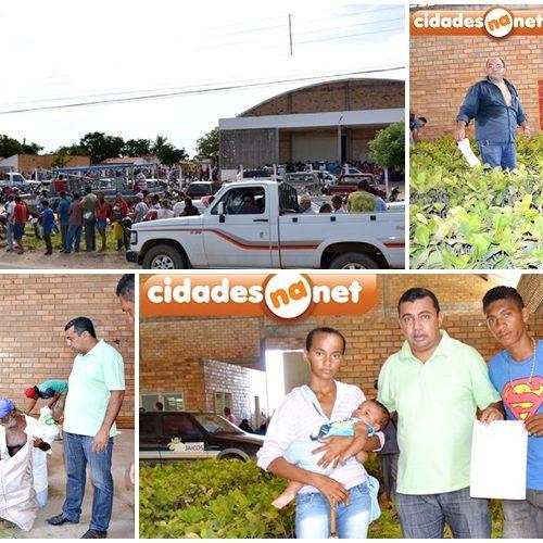 Prefeitura de Jaicós distribui mudas de caju e palma para agricultores
