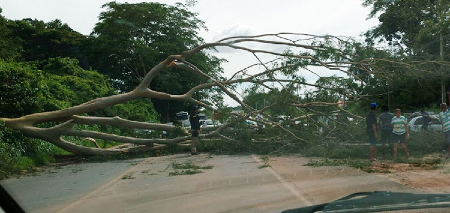 Árvore cai na BR 343 e interdita as duas vias por quase uma hora