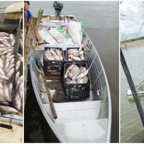 FRANCISCO MACEDO | 17 toneladas de peixe morrem na barragem do Estreito e deixa prejuízo de R$ 200 mil