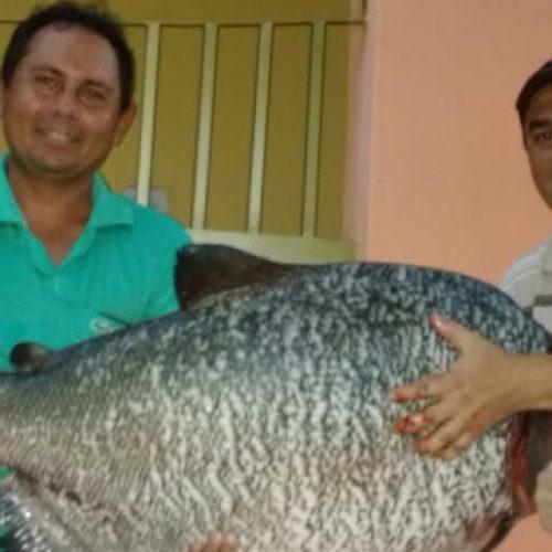 Peixe de 31 kg é pescado na Barragem de Estreito em Francisco Macedo