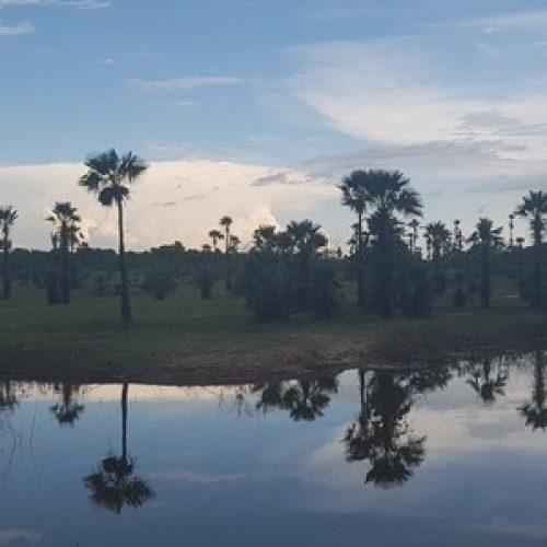 Carnaúba, palmeira do Piauí, serve até para chip de computador
