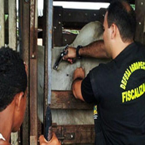 Adapi prorroga prazo final para certificação de vacinas da Febre Aftosa