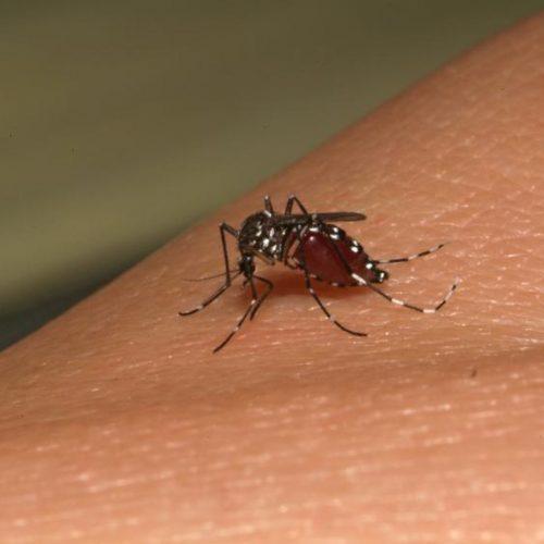 Casos de dengue aumentam quase 80% em relação ao ano passado
