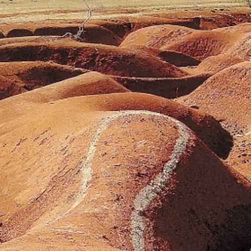 Piauí terá projeto piloto contra desertificação, anuncia diretor do MMA