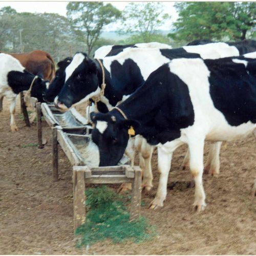 Censo agropecuário deve visitar 240 mil estabelecimentos no Piauí
