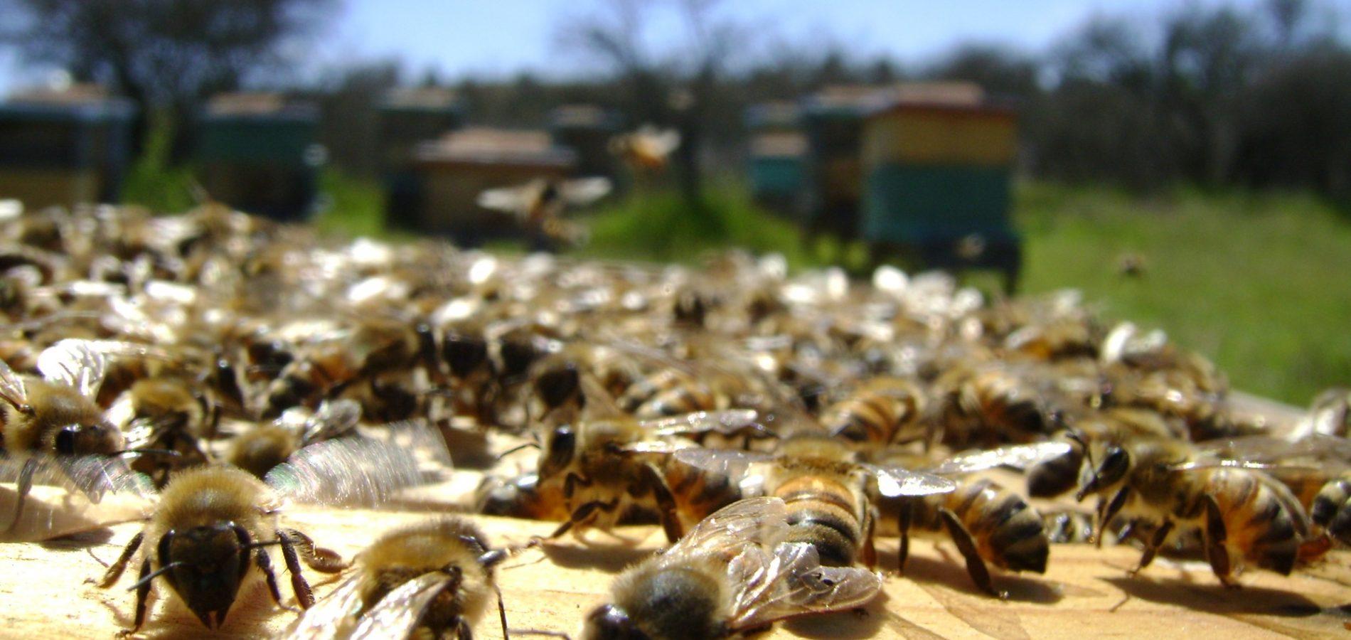 Apicultura é grande aposta da agricultura familiar para enfrentar a estiagem no Piauí