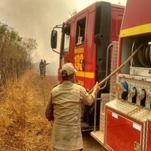 Em quatro dias, fogo consome 40km de floresta, atinge escola, fazendas e destrói plantações no Piauí