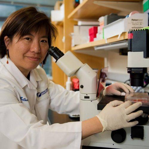 Vacinas contra melanoma são testadas com êxito em laboratórios