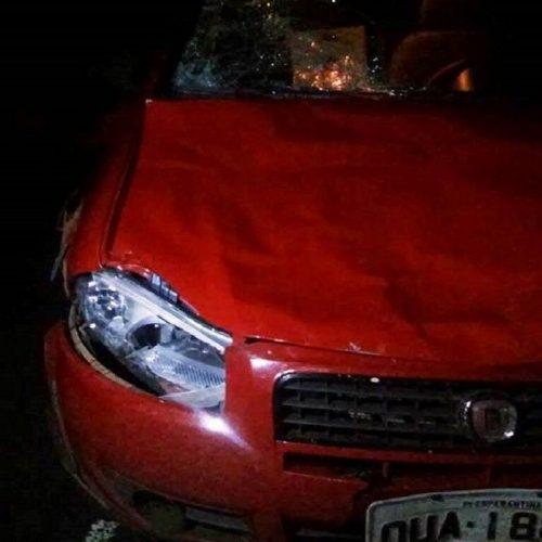 Ex-vereador sofre acidente após colidir carro com animal na PI-113