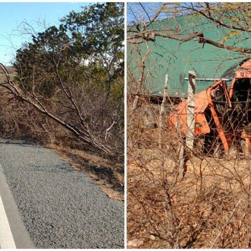Vento derruba árvore na BR 316 e provoca acidente com carreta próximo a Francisco Macedo