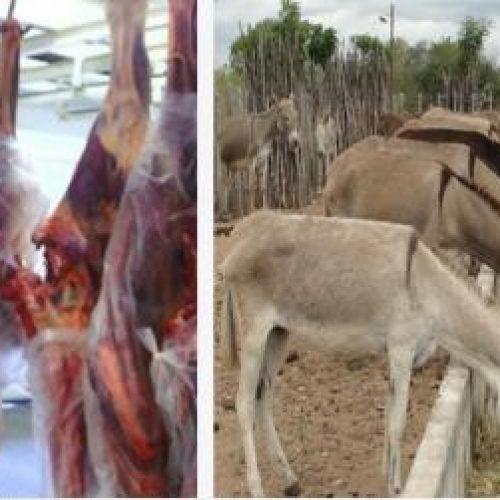Frigorífico no Brasil inicia abate de jumentos para exportação de carne