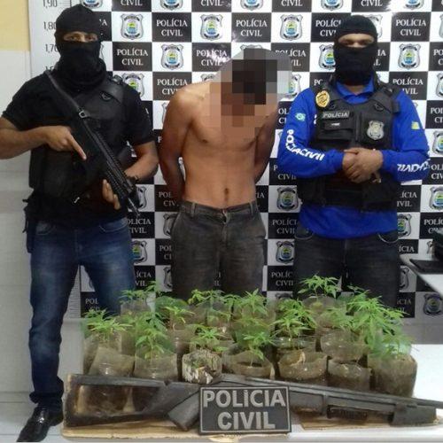 Polícia Civil apreende 80 pés de maconha em cidade do Piauí