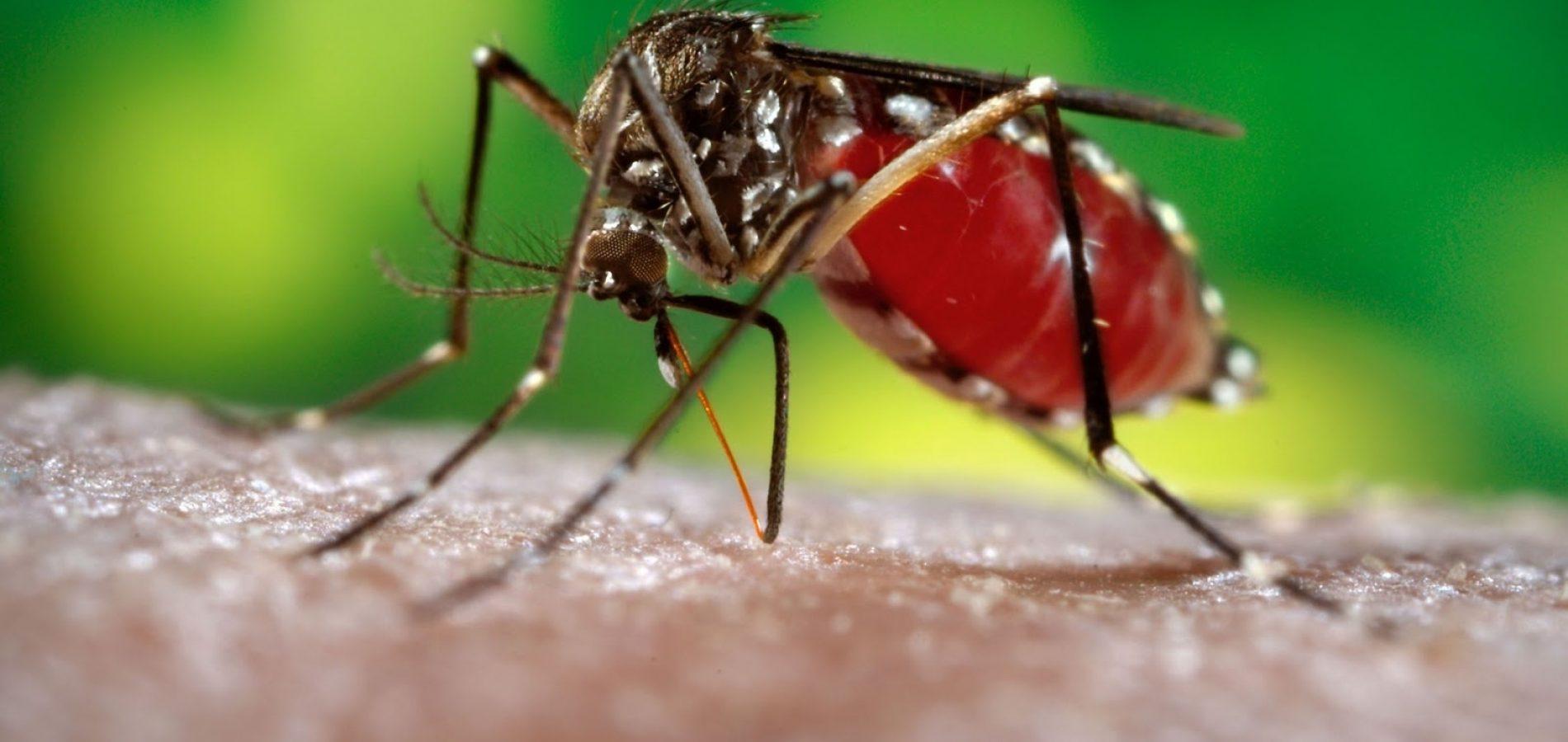 Incidência de chikungunya reduz 92,3% no Piauí, diz Saúde
