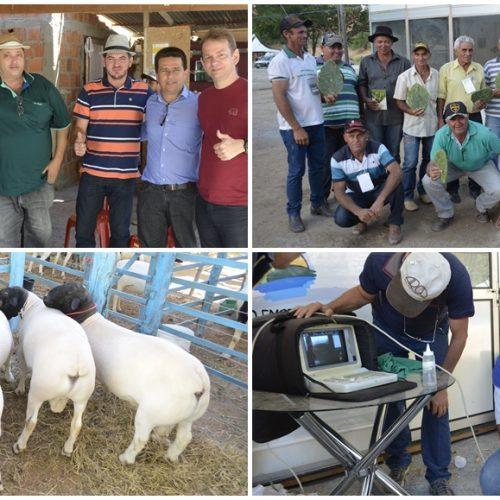 Em Caldeirão Grande do Piauí, ExpoCaboclos cresce e se destaca em exposição, negócios e público; veja fotos