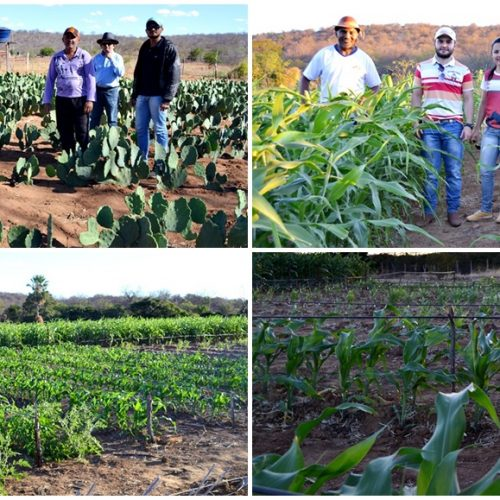 Secretário de Agricultura e técnicos visitam projetos de irrigação em Jacobina do Piauí