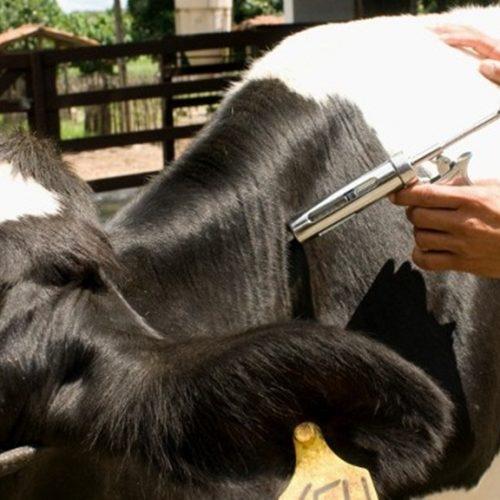 Vacinação contra a Febre Aftosa é iniciada com mudanças no Piauí