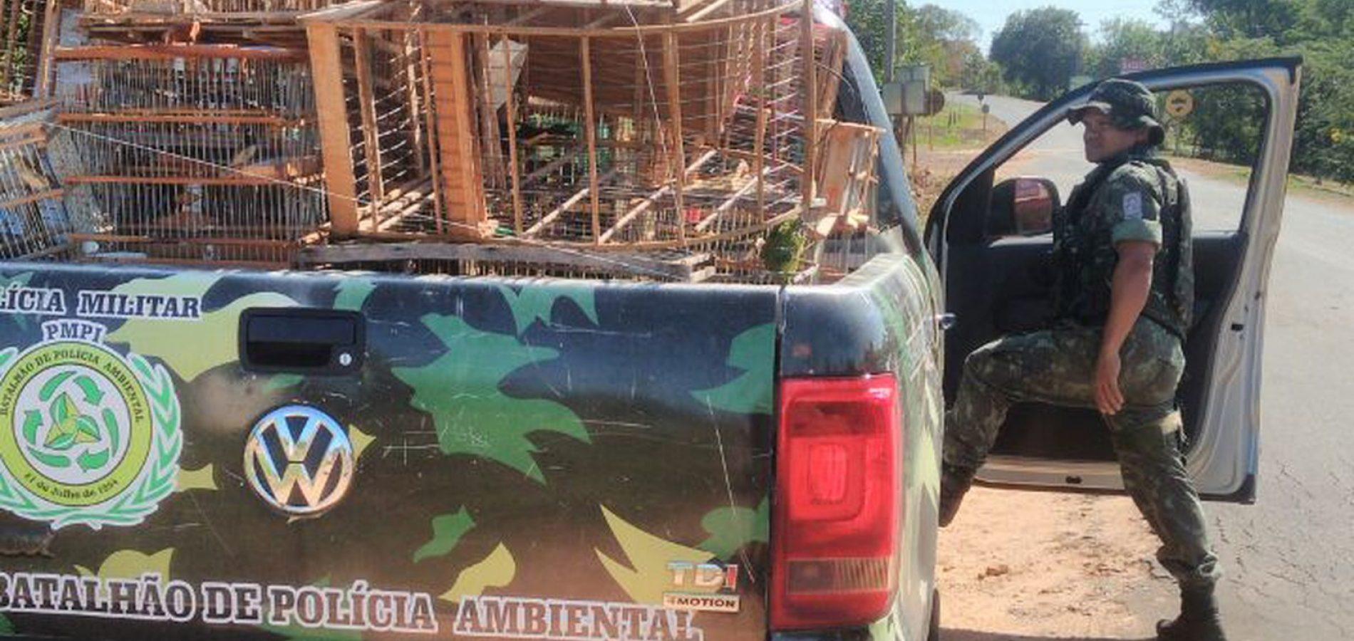 Fiscalização prende seis por crime ambiental e recolhe 15 kg de animais abatidos no Piauí