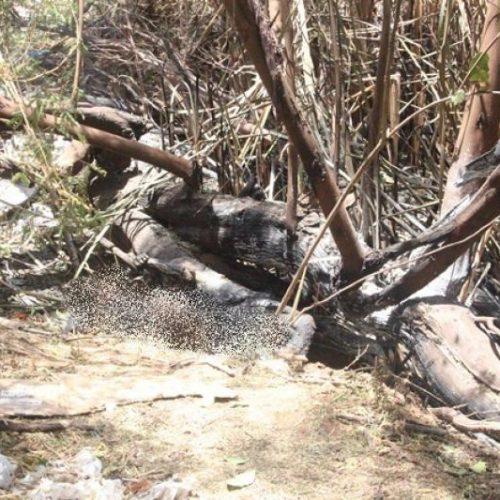 Laudo cadavérico aponta que mulher foi queimada viva em Picos