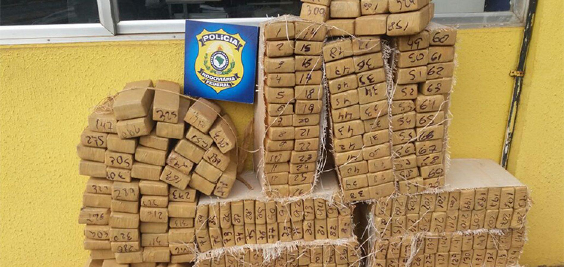 Polícia incinera maconha paraguaia apreendida no PI e avaliada em mais de R$ 1 milhão