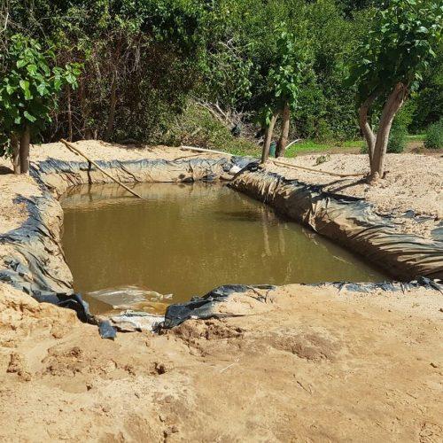 Polícia encontra plantação com cerca de 6 mil pés de maconha em terreno no PI