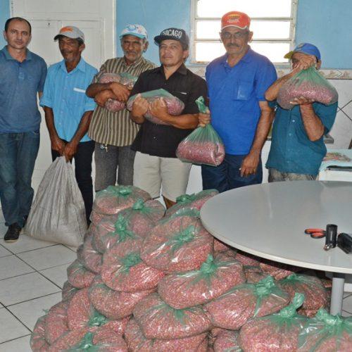 Agricultura inicia a distribuição de uma tonelada de sementes em Massapê do Piauí