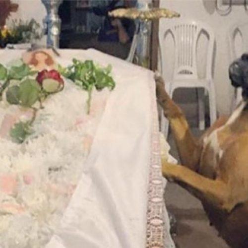 No Piauí, cadela participa do velório de dona e causa comoção