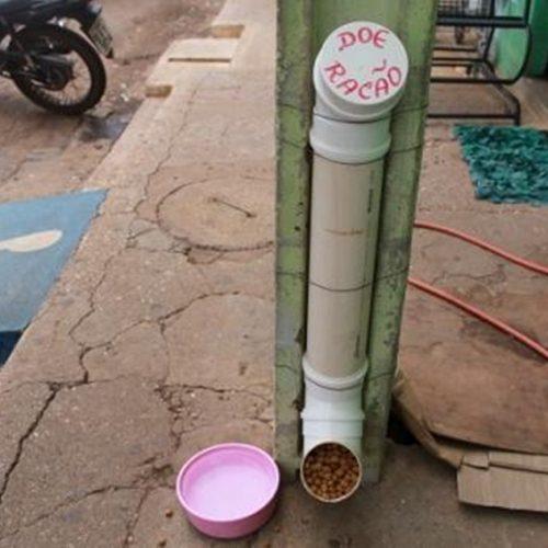 Picoense desenvolve comedouros para animais que vivem em situação de abandono