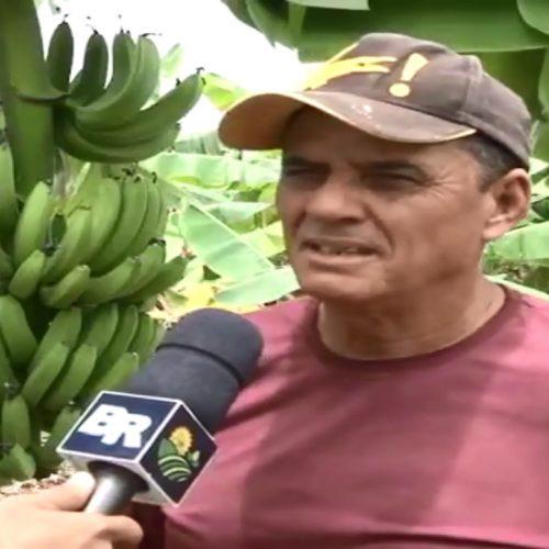 Natural de Campo Grande do Piauí, fruticultor vem se destacando na produção de Banana na região Sul do Maranhão