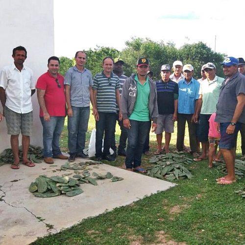 Agricultores recebem mudas de palma e passam por oficina em Massapê do Piauí