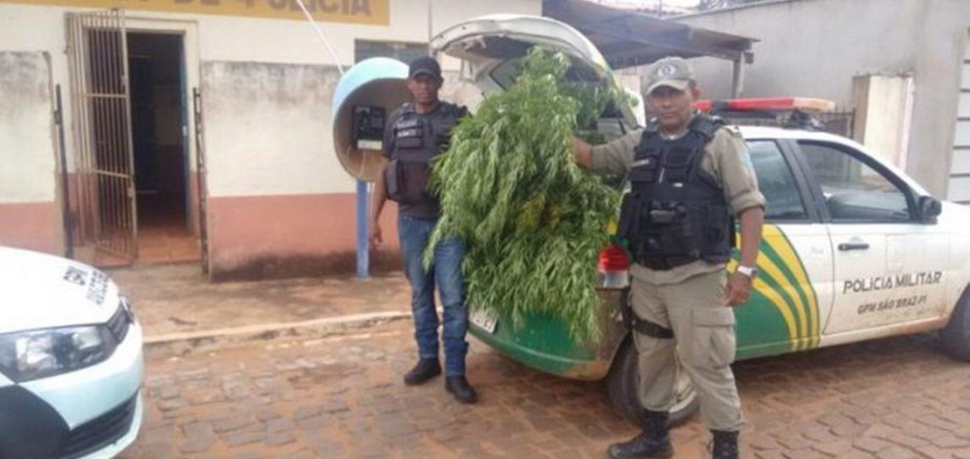 Agricultor preso com plantação de maconha no interior do Piauí diz que erva era pra fazer chá