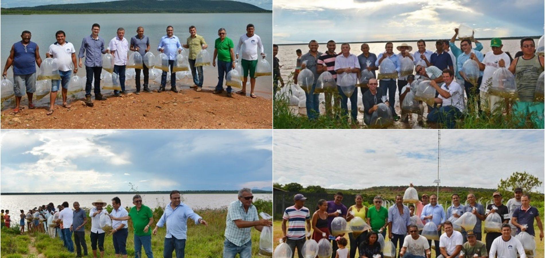 Programa da Semar lança 1,5 milhão de alevinos em açudes no Piauí