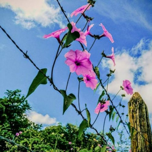 NATUREZA EM EVIDÊNCIA | O fim do inverno e a flor da jitirana; veja fotos