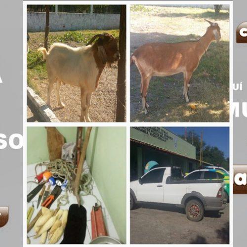 Polícia militar de Fronteiras prende quadrilha suspeita de furto de 300 animais