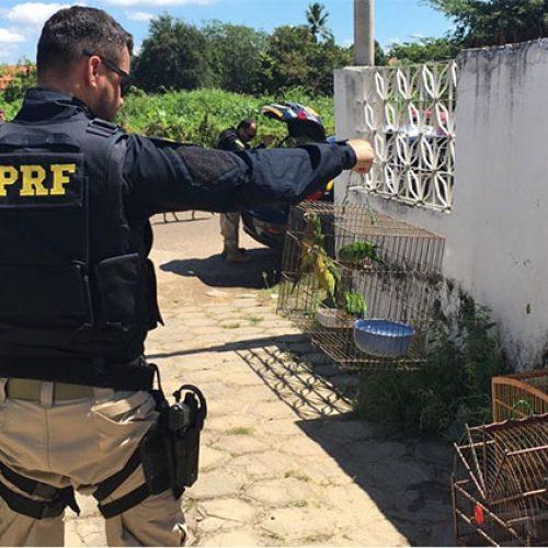 PRF apreende 35 animais silvestres e prende 5 pessoas no interior do Piauí