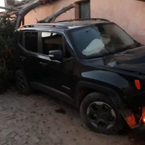 Polícia confirma que homem foi atingido por dois tiros antes de colidir carro em árvore em Pio IX