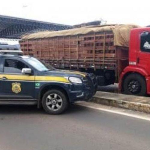 PRF apreende cerca de 49 toneladas de madeira irregular no Piauí