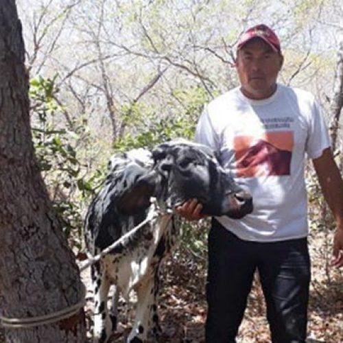 Adolescentes são apreendidos após furtar gado em fazenda do PI