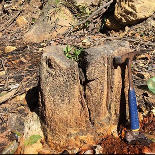 Nova Floresta Fóssil é descoberta às margens de riacho no Piauí