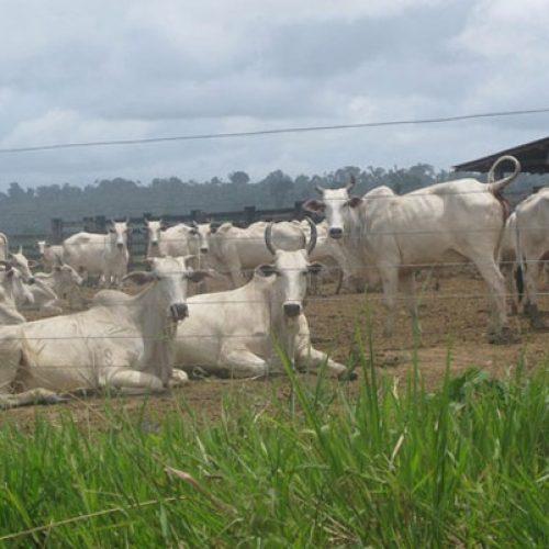 Em 11 anos, área de propriedades agropecuárias no Brasil cresce o equivalente ao estado do Acre, diz IBGE