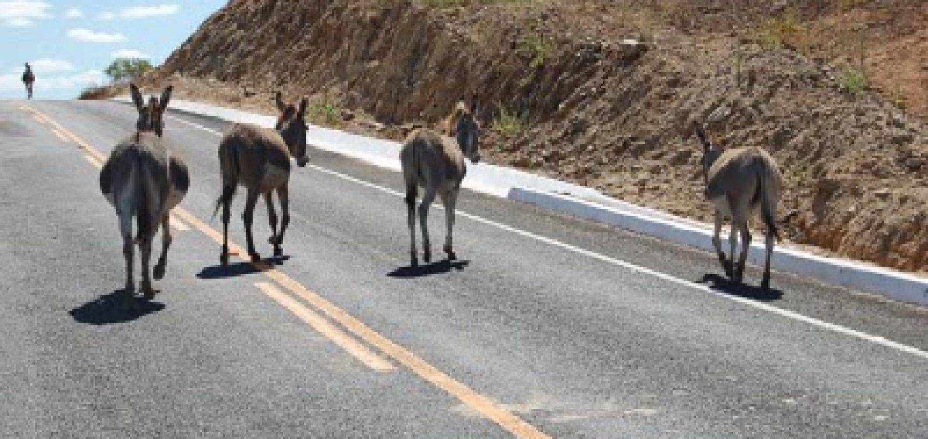 PICOS | Secretário alerta para o perigo de animais soltos nas ruas