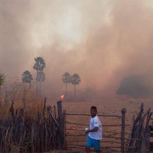 Incêndio que dura mais de 24 horas mata animais e destrói lavouras em Santa Cruz do Piauí