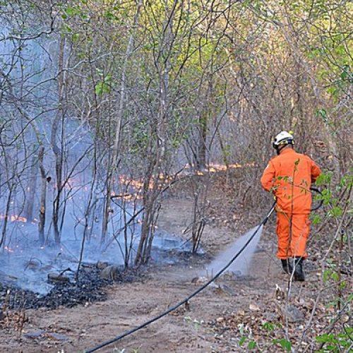 Incêndio florestal é controlado após devastar 10 km de mata no Piauí