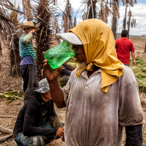 Trabalho escravo: seis empresários piauienses são denunciados por dois anos consecutivos em Lista Suja