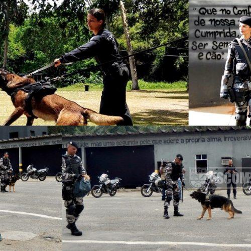 Policial de Picos participa do 5º Curso de Operações com Cães na Bahia; veja fotos