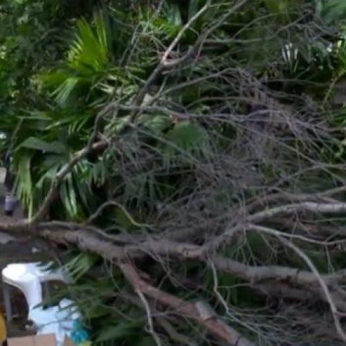 No Piauí, mulher fica ferida após árvore cair em na sua cabeça