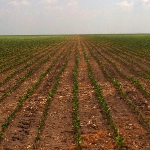 Produtores de soja querem propor modificações no projeto de regularização fundiária