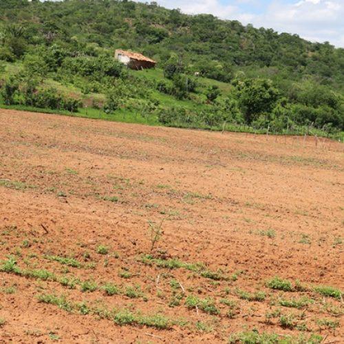 Agricultores temem perdas nas plantações por falta de chuvas