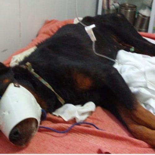 Cão é enterrado vivo e resgatado após moradores ouvirem seu choro